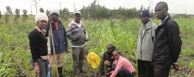 RLC Bonn PhD student Juliet Wanjiku Kamau publishes article on organic agriculture in Kenya