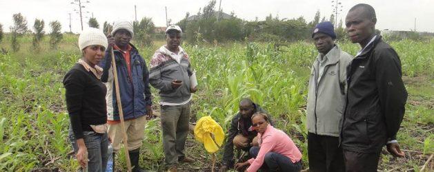 RLC Bonn PhD student Juliet Wanjiku Kamau publishes article on organic agriculture in Kenya